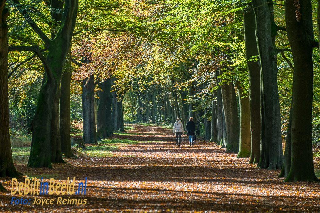Beukenlaan Leijense bos Bilthoven in de herfst Hond uitlaten