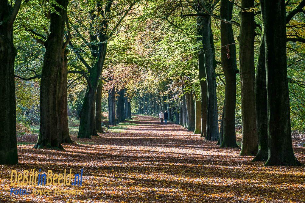 Beukenlaan Leijense bos in de herfst Hond uitlaten