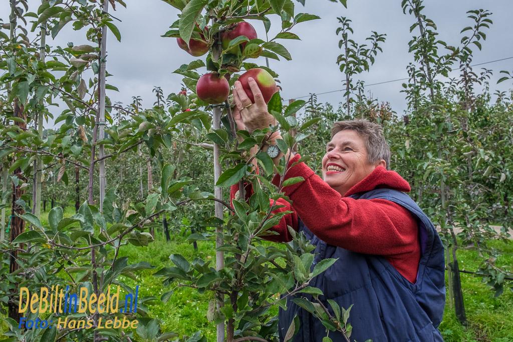 Voedselbank De Bilt Appels Plukken in Zeist