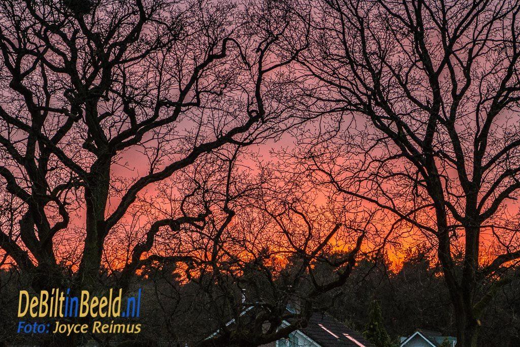 Zonsondergang boven het Leyense bos