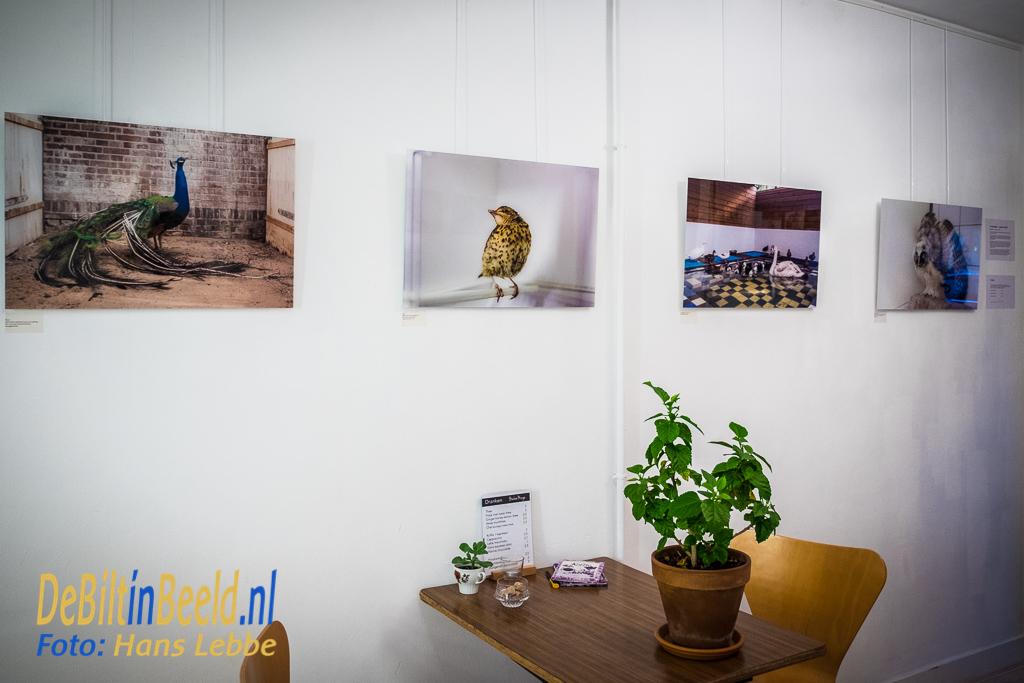 Ruimte voor Kunst De Bilt Marieke Wijntjes Vogels
