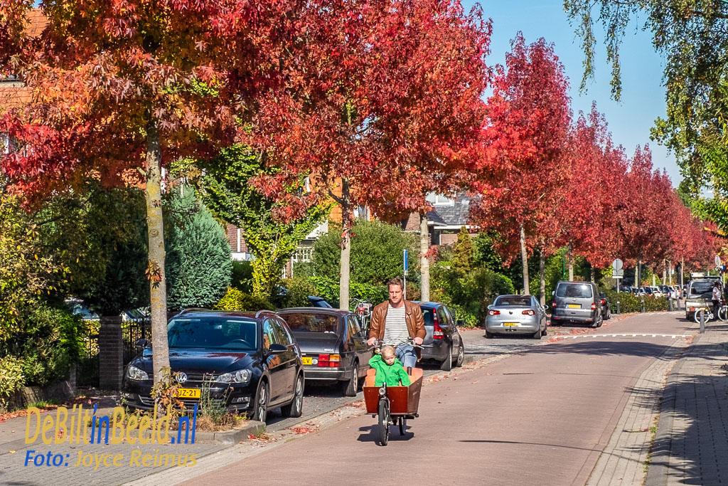 Samen op de fiets in een decor van brandrode amberbomen langs de Waterweg in De Bilt