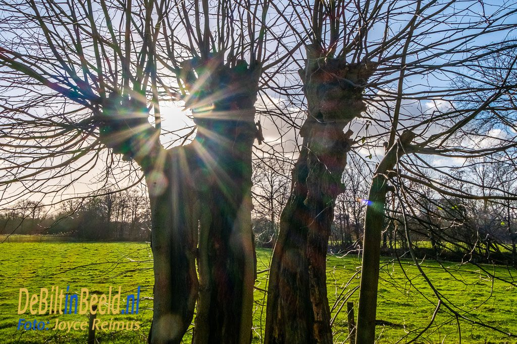 vroege voorjaarswandeling op Sandwijck