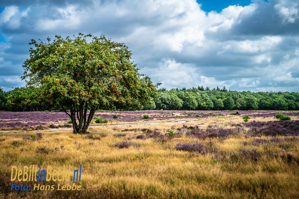 Heide gebieden Hilversum Hollandsche Rading