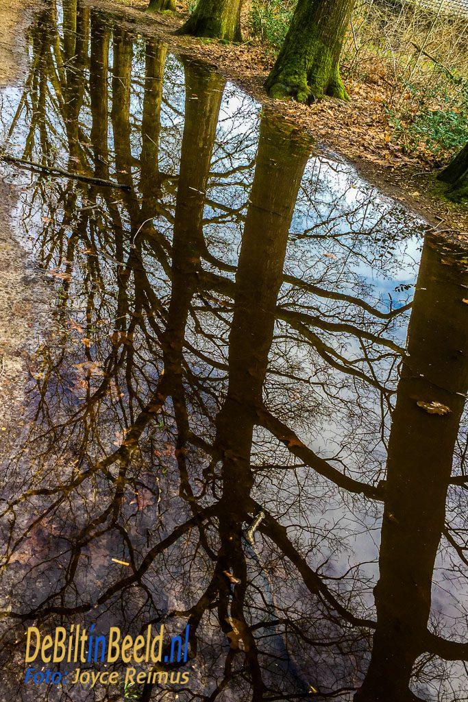 Water in het Leyense Bos. Foto Joyce Reimus